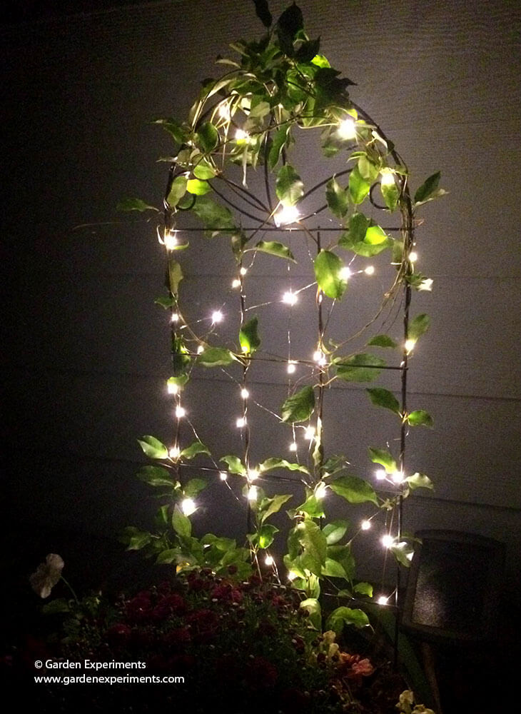 adding a little magic to my garden using fairy lights. Black Bedroom Furniture Sets. Home Design Ideas
